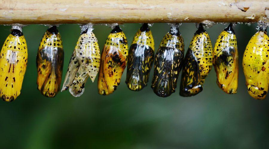 animal-blur-butterfly-39862