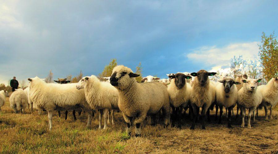 animals-clouds-farm-97317